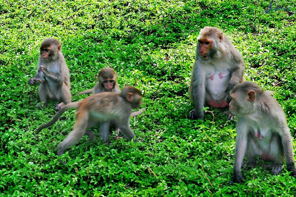 Monkey Island – The Highlight Of Cat Ba Tourism - Journey Vietnam