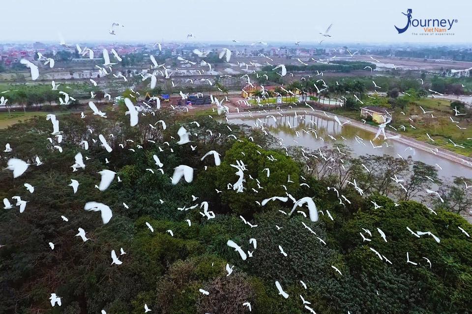 Chi Lang Nam Stork Island