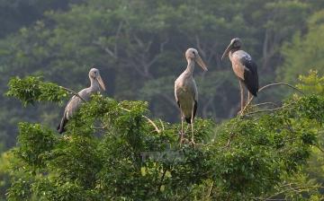 thung-nham-bird-park-2