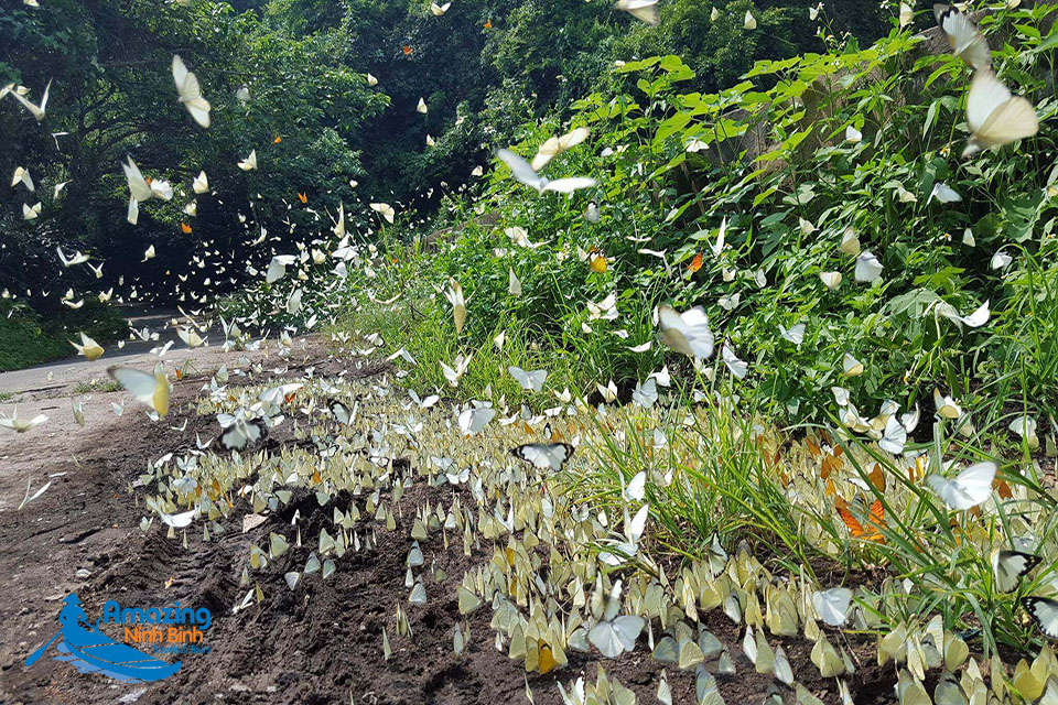 Admiring Butterfly Forest In Cuc Phuong