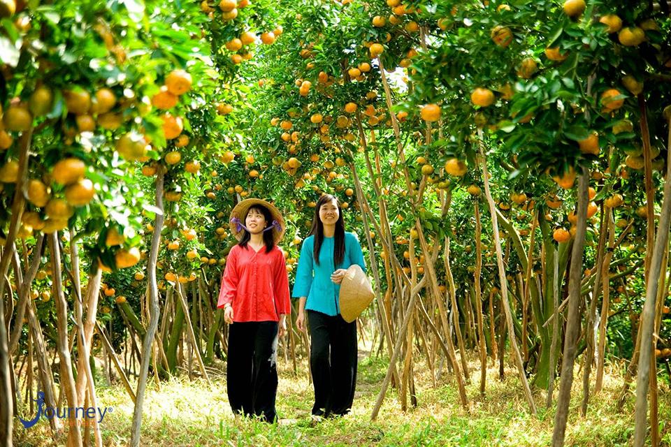 Orchards Near Sai Gon